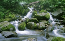 Running Stream Through a Japanese Beech Forest - Japan