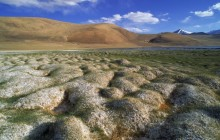 Tussocks of Permafrost - Ladakh - India