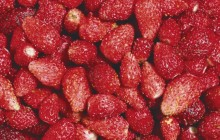 Woodland strawberry - Food