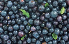 Bilberries - Food