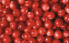 Cranberries HD wallpaper - Food