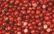 Cranberries images hd