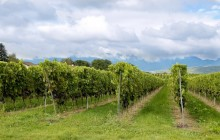 Vineyards HD