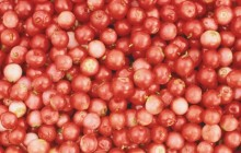 Cranberries wallpaper