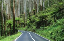 Road Through the Rainforest - Australia