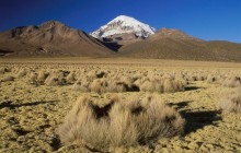 Nevado Sajama - Seen from Sajama Valley - Bolivia
