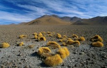Arid Landscape of the Altiplano - Bolivia