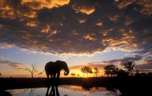 Elephant Silhouetted at Sunset - Botswana