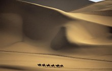 Camel Caravan Passes Through the Sands that Sing - China