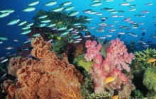 Coral Landscape With Soft Corals and Fish - Fiji