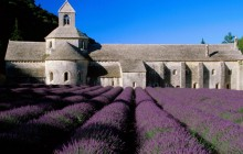 Lavender Field - Abbey of Senanque - Provence - France