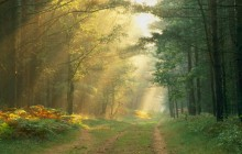 Sun Rays in the Forest - Germany - Germany