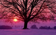 Winter Sunset and the Majestic Oak - Germany