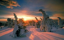 Snow-Covered Trees - Hochharz National Park - Germany