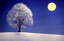 Snow-covered tree and moon - Bavaria - Germany