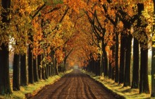 Tree-Lined Lane in Autumn - Holland - Netherlands