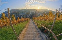 Vineyard at Sunset - Munot Castle - Schaffhausen - Switzerland