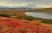 Colorful Bearberry Grows Along Reflection Lake - Alaska