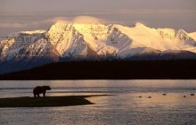 Alaskan Brown Bear Silhouetted Against Mount Katolinat - Alaska