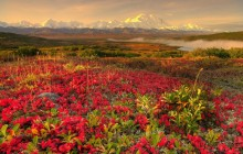 Alaskan Tundra in Autumn - Denali National Park - Alaska