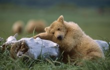 A Comfy Place - Katmai National Park - Alaska