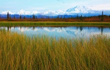 Calm Pond - Denali National Park - Alaska