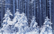 Snowy Forest - Czech Republic