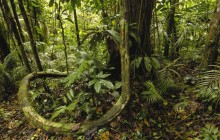 Yasuni National Park - Amazon Rainforest - Ecuador