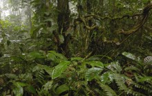 Rainforest - Andes Mountains - Ecuador