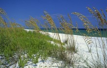 Sea Oats - Perdido Key Beach - Pensacola - Florida