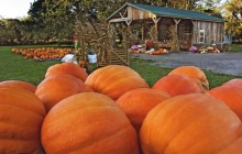Roadside Pumpkin Stand - Indiana