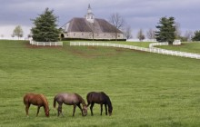 Donamire Horse Farm - Near Lexington - Kentucky