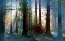 Magic forest wallpaper - Forest