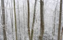 Snowy forest wallpaper - Forest wallpaper