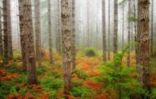 Natural forest wallpaper - Forest