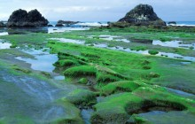 Low Tide - Seal Rock State Park - Seal Rock - Oregon