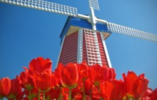 Windmill and Tulips - Woodburn - Oregon