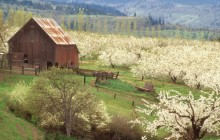 The Promise of Spring - Mosier - Oregon