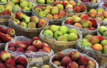 Macintosh Apples in Bushel Baskets - New York - New York