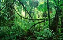 Congo jungle - Jungle