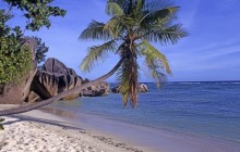 Leaning Palm - Seychelles - Seychelles