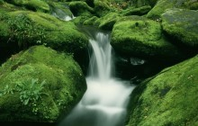 Moss-Covered Rocks Along Roaring Fork - Great Smoky Mount... - Tennessee