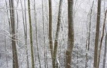 Forest in Falling Snow - Great Smoky Mountains - Tennessee