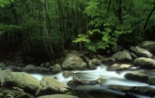 Little Pigeon River - Great Smoky Mountains National Park - Tennessee