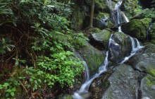 Place of a Thousand Drips - Roaring Fork - Great Smoky Mo... - Tennessee