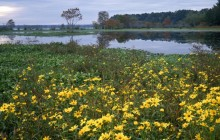 Marigolds in Bloom in a Swamp - Martin Dies - Jr. State P... - Texas