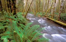 Running Wild - Hughes Creek - Olympic Park - Washington