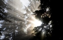 Shafts of Light - Mount Baker-Snoqualmie Forest - Washington