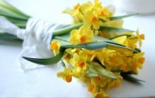 Daffodils bouquet wallpaper - Bouquets