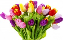 Birthday flowers wallpaper - Bouquets